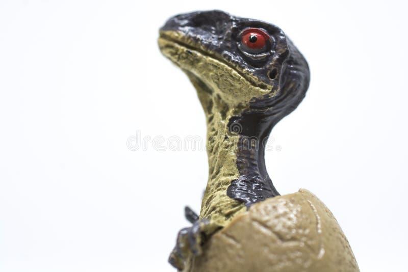 Velociraptor μωρών από το αυγό στοκ φωτογραφία με δικαίωμα ελεύθερης χρήσης