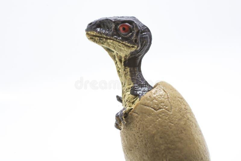 Velociraptor μωρών από το αυγό στοκ εικόνα με δικαίωμα ελεύθερης χρήσης