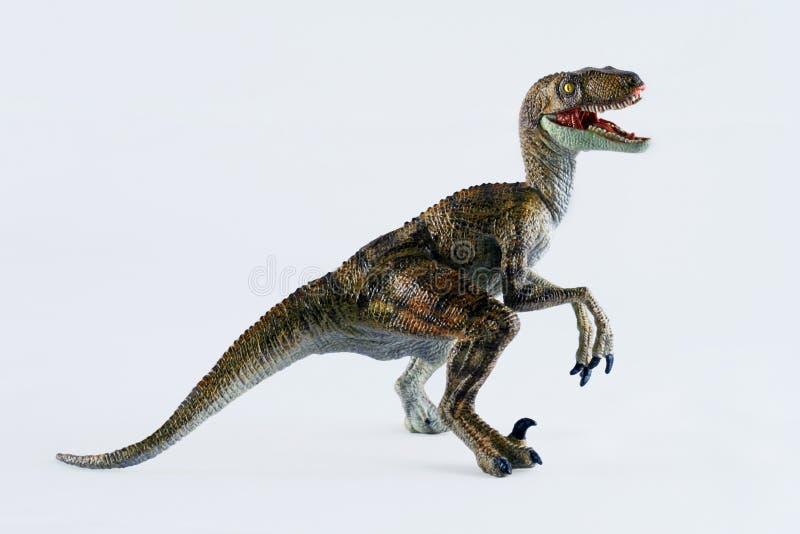 A Velociraptor. Dinosaur Stands Against a White Background