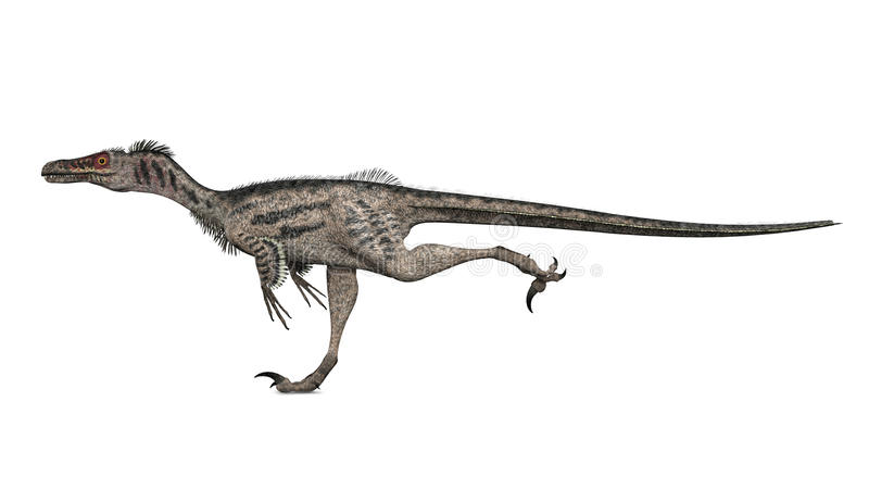 Velociraptor illustration stock
