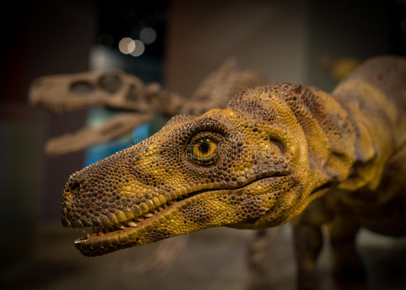 Velociraptor στοκ εικόνες με δικαίωμα ελεύθερης χρήσης