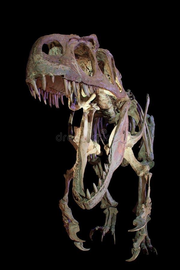 Velociraptor image stock