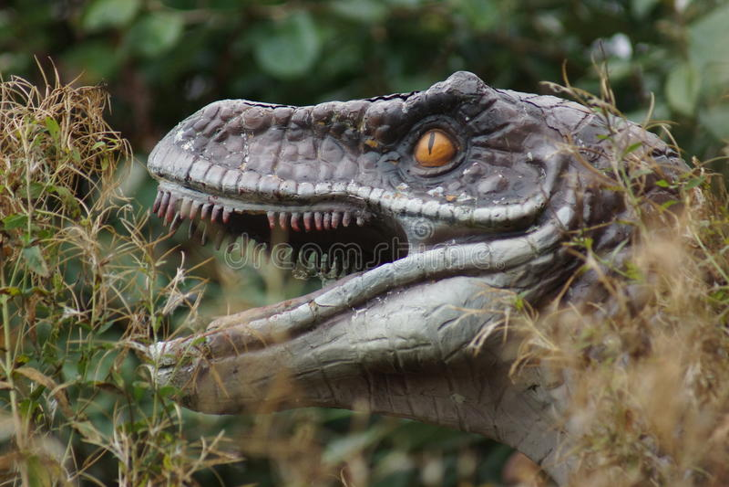 Velociraptor στοκ φωτογραφία
