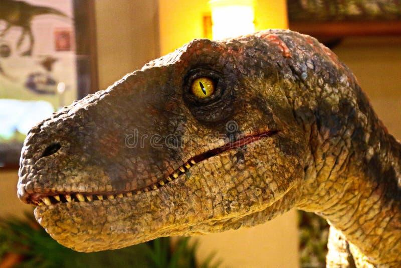 Velociraptor de dinosaure de reproduction d'?chelle de 1:1 image stock