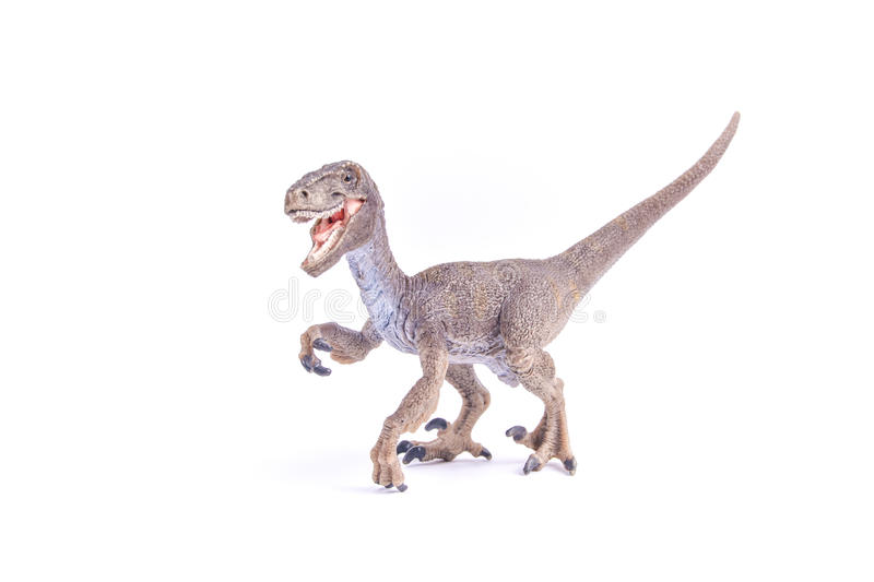 Velociraptor dinosaur. A Velociraptor dinosaur stands against white background stock images