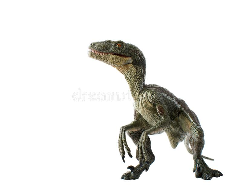 Velociraptor mau no fundo branco imagens de stock