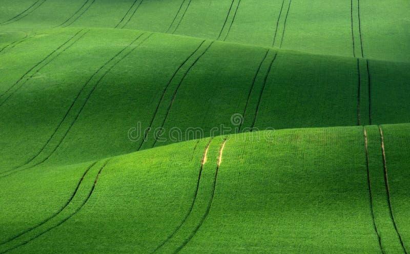 Velours vert Rolling Hills vertes de blé qui ressemblent au velours côtelé avec les lignes étirage dans la distance photo libre de droits