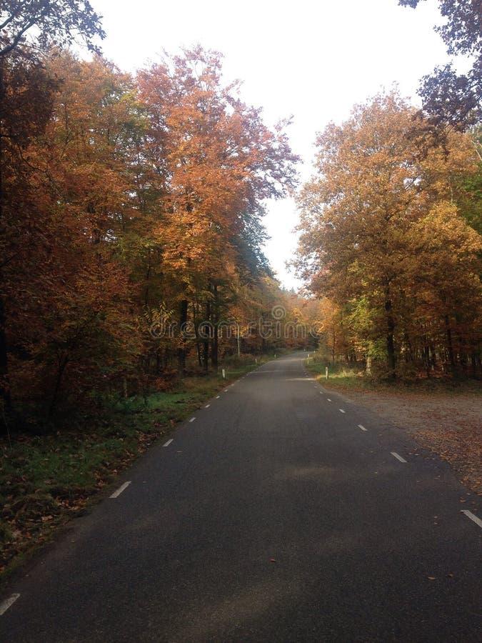 Veluwe road autumn stock images