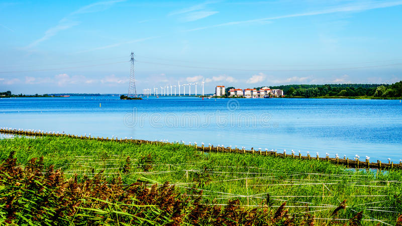Veluwemeer鸟类保护区与芦苇的沿岸 免版税库存图片