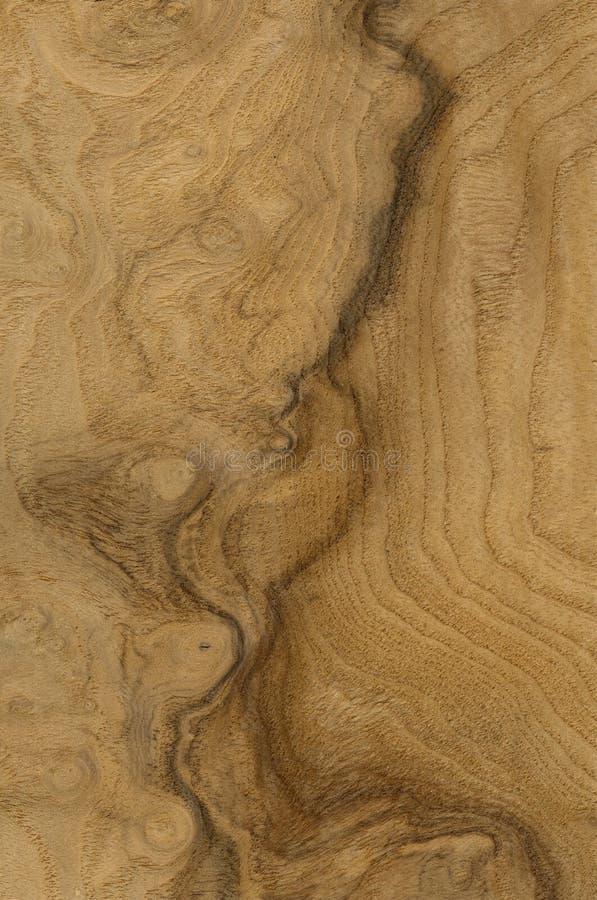 Vena de la madera ilustración del vector