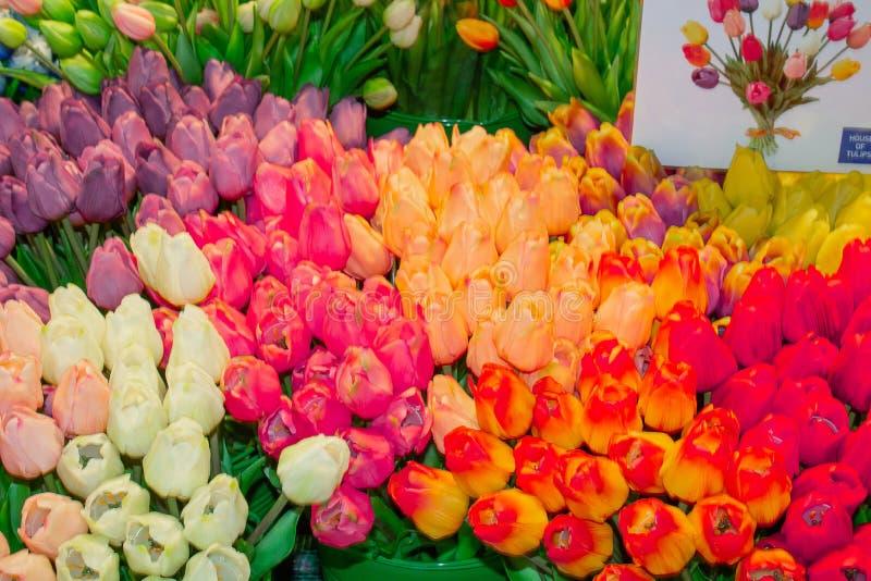 Venda das tulipas no aeroporto Schiphol de Amsterdão foto de stock