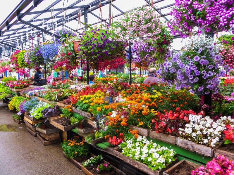 Venda de plântulas da flor no mercado em Riga latvia foto de stock