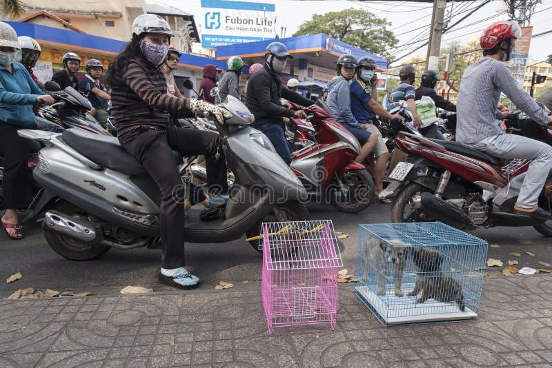 Vendant les chiots OM la rue photographie stock