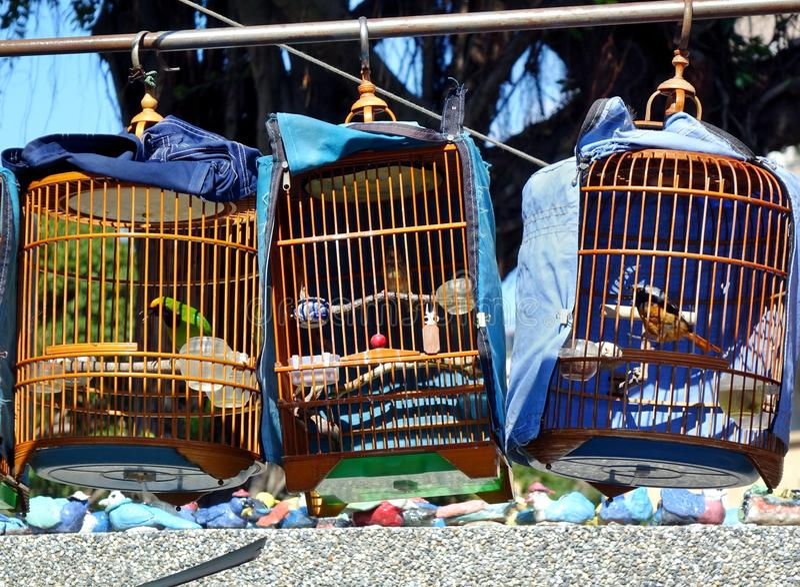 Vendedor ambulante Selling Songbirds fotos de archivo libres de regalías