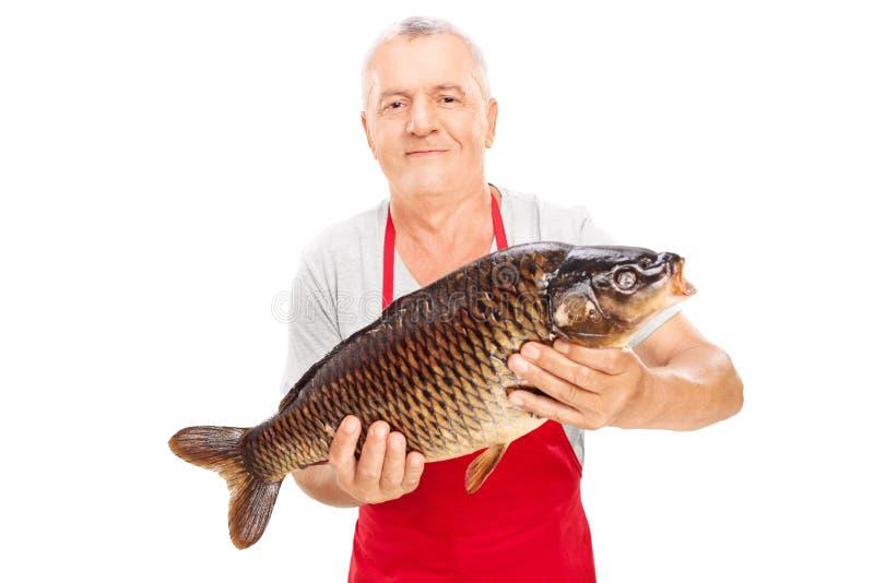 Vendedor de peixe maduro que guarda uma carpa comum fotos de stock