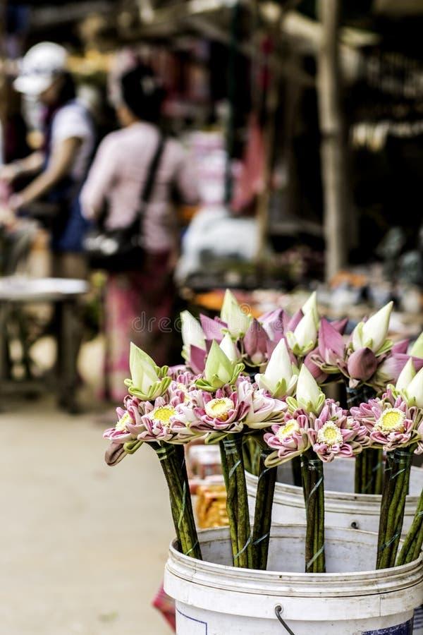 Vendendo Lotus Flowers per la statua d'offerta di Buddha di sacrificio in Cambogia immagine stock