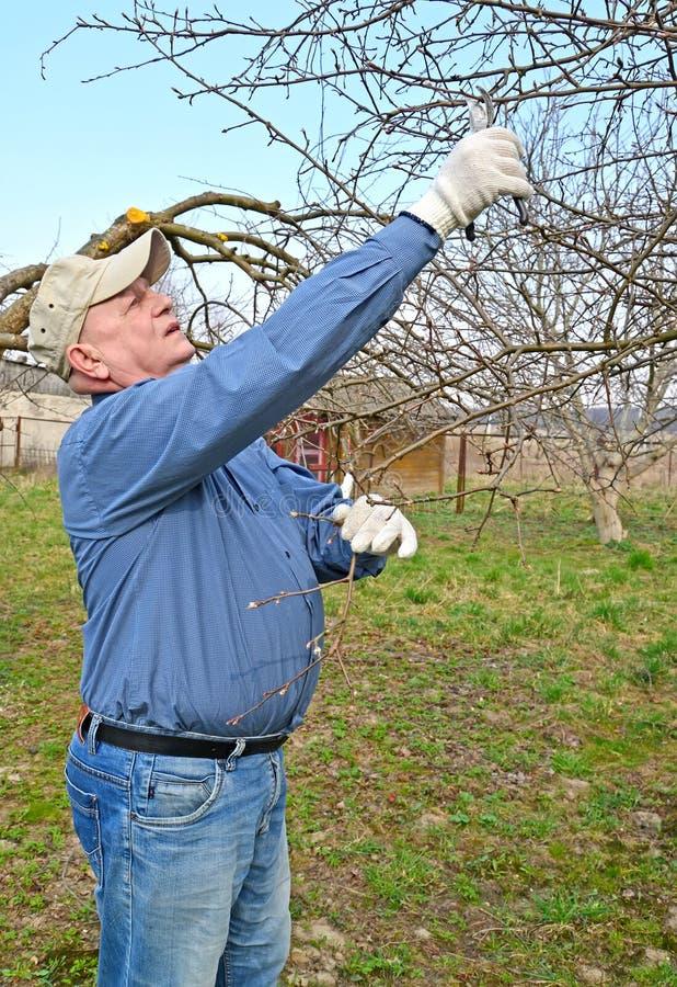 Vender por menos dos ramos de secateurs de uma fruto-?rvore A mola funciona em um jardim fotos de stock