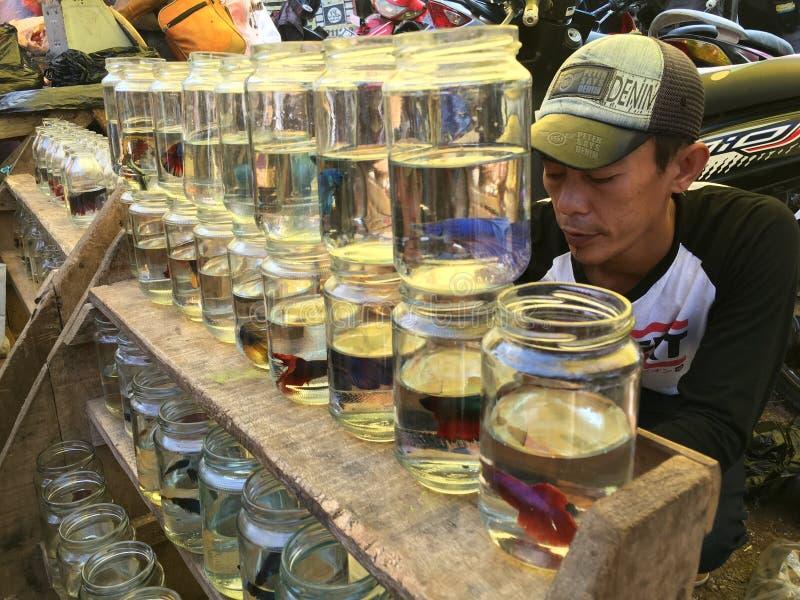 Vendeur de poissons photographie stock libre de droits