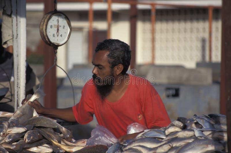 Vendeur de poissons au Trinidad photo libre de droits