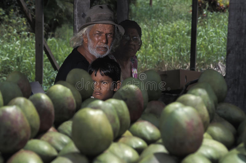 Vendeurs de mangue, Trinidad photo libre de droits