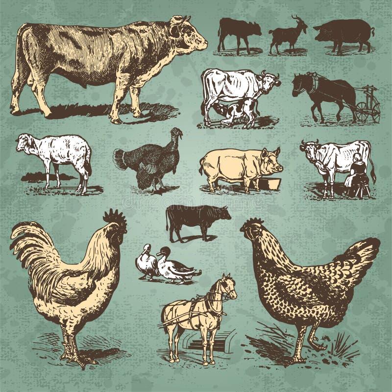Vendimia de los animales del campo fijada () ilustración del vector