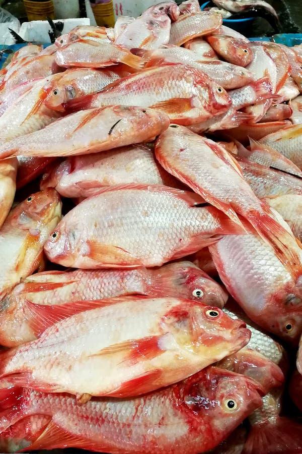 Vendita del pesce fresco al mercato immagine stock