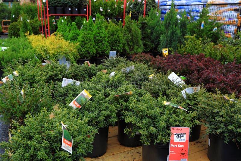 Vendite degli arbusti fotografie stock libere da diritti
