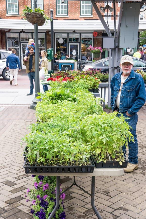 Venditore della pianta di pomodori al mercato della città di Roanoke fotografie stock