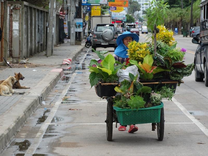 Venditore della pianta della via a Pattaya fotografia stock libera da diritti