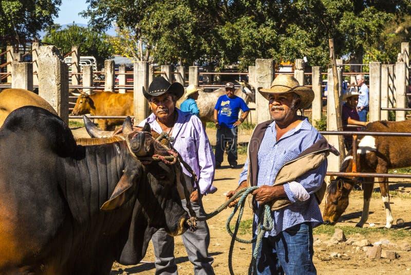 Venditori messicani del bestiame immagini stock