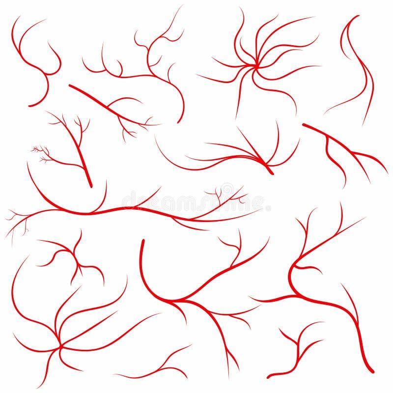 Vene dell'occhio Navi dell'occhio umano, arterie del sangue messe Sistema medico delle arterie della vena del bulbo oculare illustrazione vettoriale