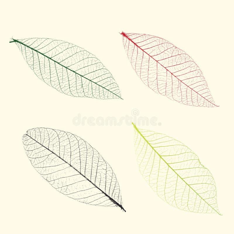 Vene di vettore delle piante illustrazione vettoriale