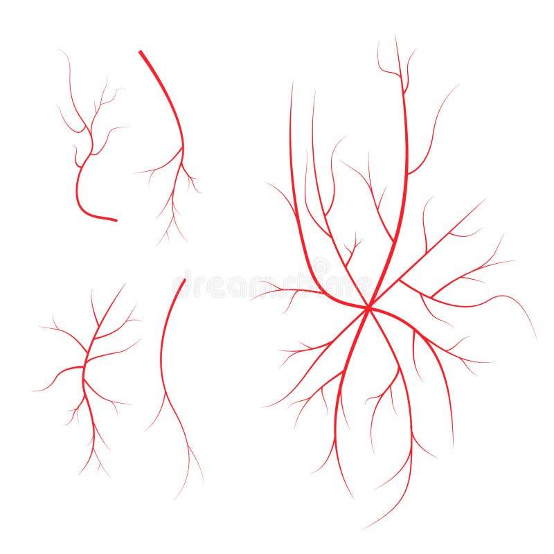 Vene ematiche umane, navi rosse su fondo nero illustrazione vettoriale