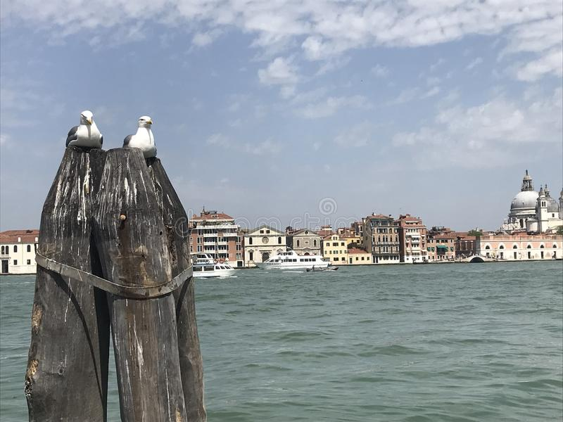 Venedig förälskelseseagulls fotografering för bildbyråer