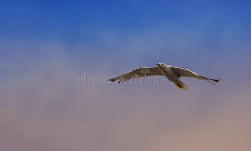 Venedig Italien - Augusti 15, 2017: Seagull royaltyfri bild