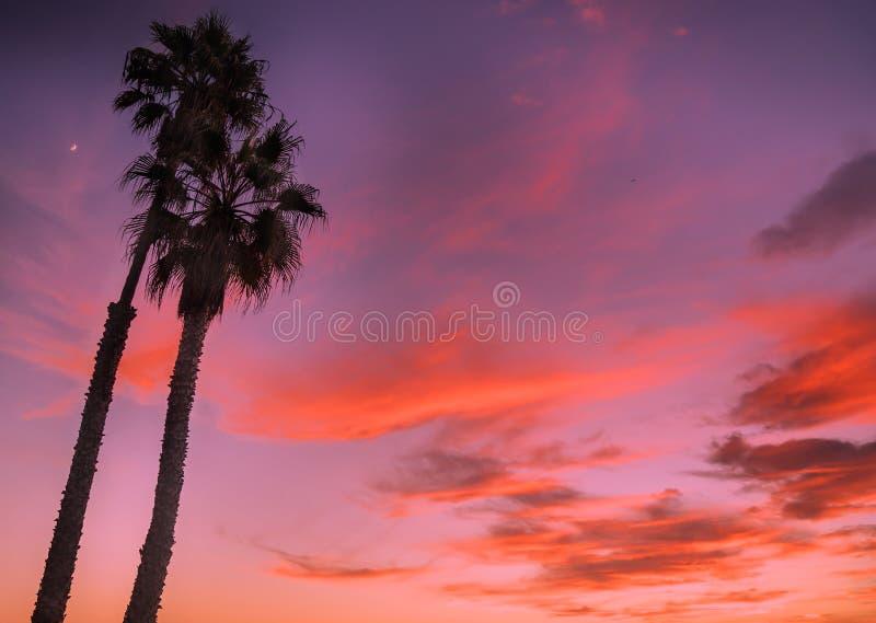 Venedig-Strand-, -ca-, -sonnenuntergang- und -palme stockfoto
