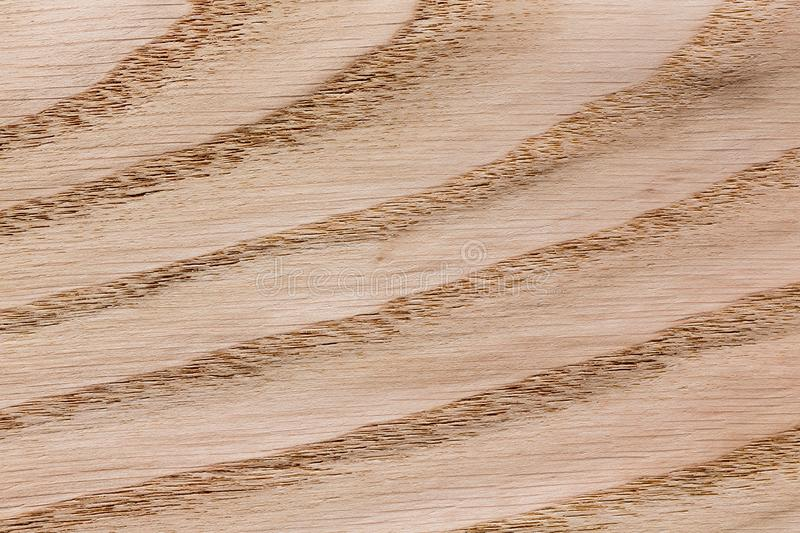 Veneer background for your design. Natural wooden texture, pattern. royalty free stock photos