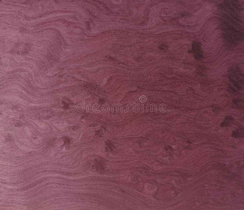 VENEER burls wood Pattern violet wooden material finish surface furniture burr texture wall background. Plant royalty free stock image