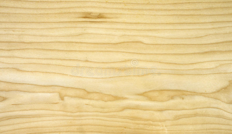 Veneer maple stock image