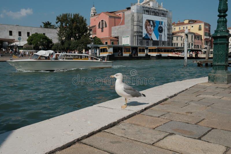 Venetië, Italië, Toeristen op Grand Canal van Venetië stock fotografie