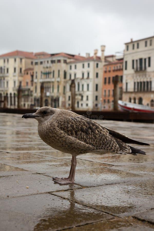 VENEZIA DI BEAUTIUL, VENEZIA, ITALIA immagini stock libere da diritti