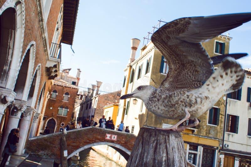 VENEZIA, ITALIA - 7 OTTOBRE 2017: Gabbiano vicino al mercato ittico a Venezia, Italia fotografie stock libere da diritti