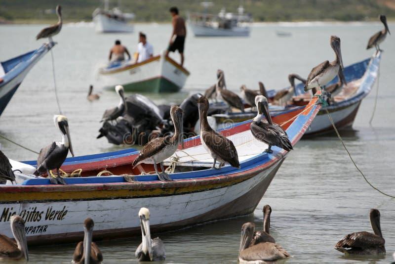VENEZUELA ISLA MARGATITA JUANGRIEGO BEACG VAN ZUID-AMERIKA royalty-vrije stock foto