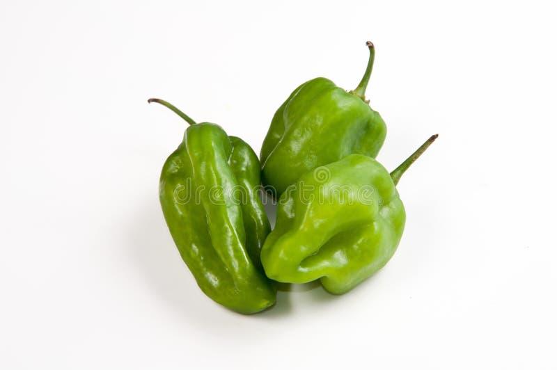 Venezuelan Aji dulce pepper stock photography