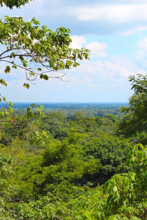 Venezuelano Llanos foto de stock royalty free