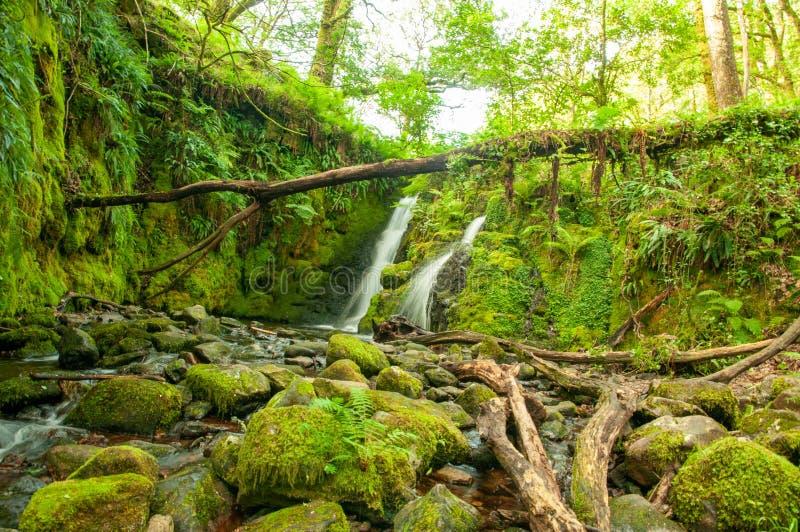 Venforddalingen, dichtbij Dartmoor, Devon royalty-vrije stock foto
