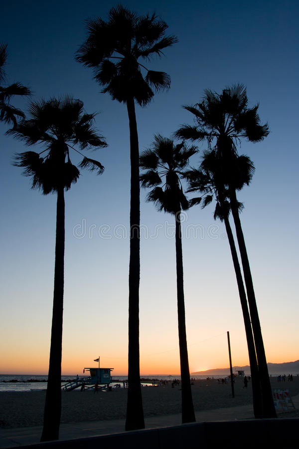 Venice Beach Sunset. Palm trees on Venice Beach at sunset on a warm day in Los Angeles, California, USA royalty free stock photo