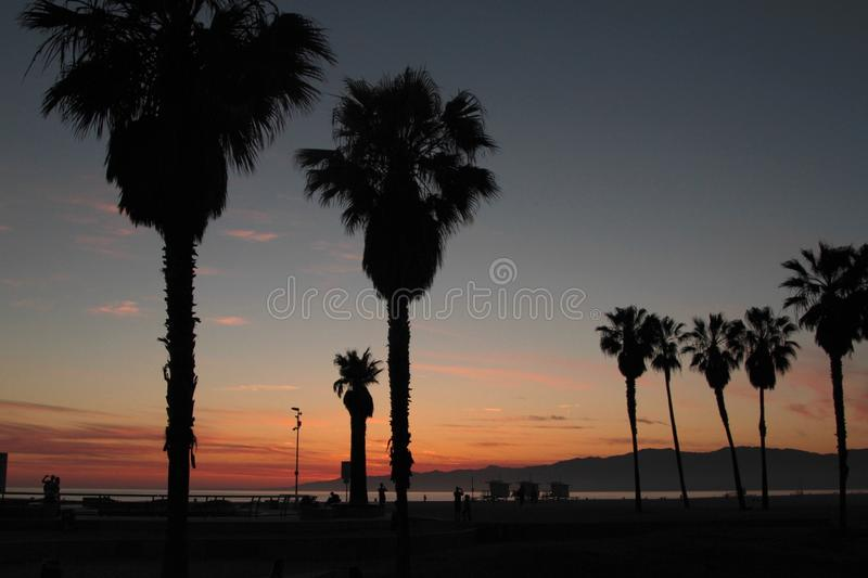 Venice Beach Sunset. Venice Beach at sunset with trees royalty free stock image