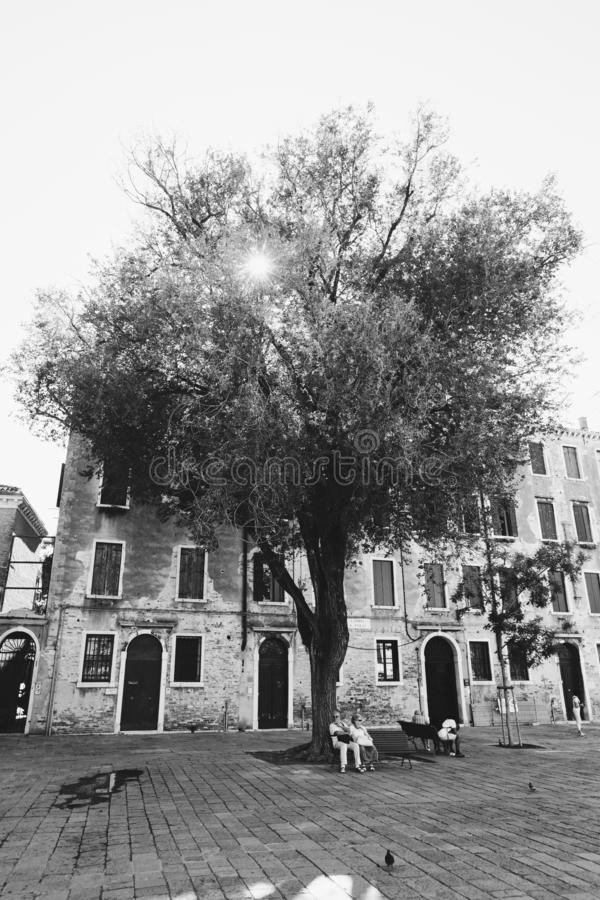 Venice, Italy - July 14th, 2017.Beautiful large tree in the middle of the square in Italy in Venice. Shop with an elderly cute. Couples resting royalty free stock images