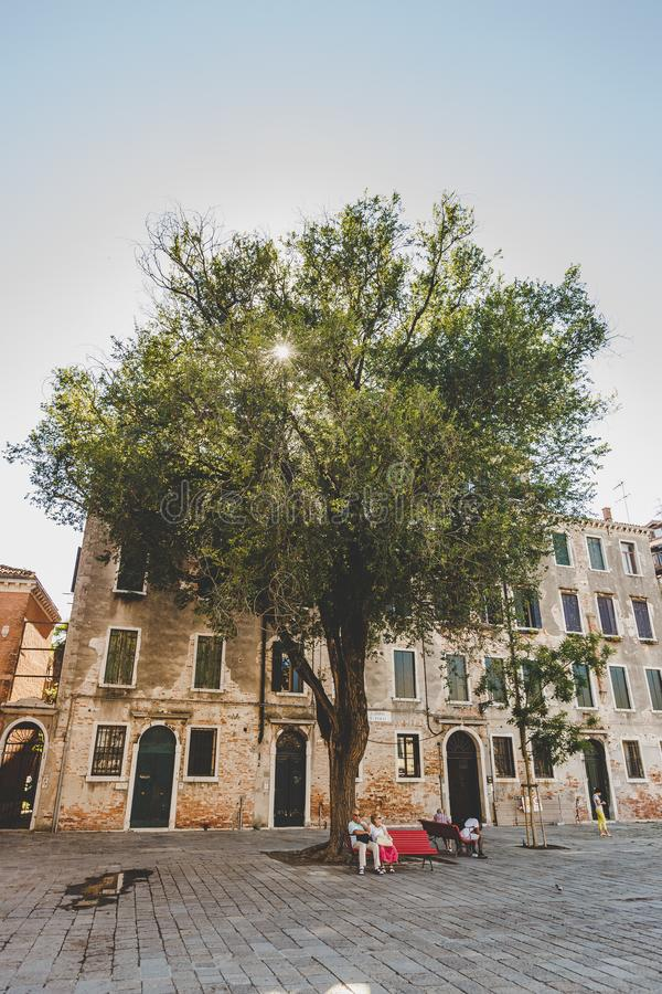 Venice, Italy - July 14th, 2017.Beautiful large tree in the middle of the square in Italy in Venice. Shop with an elderly cute. Couples resting stock photography